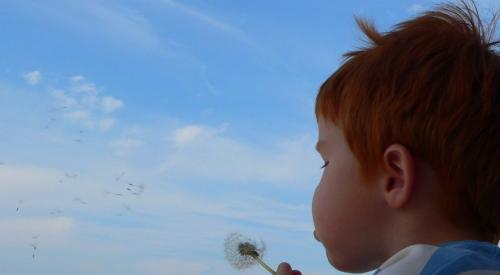 Young child with red hair blowing a dandelion